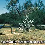 Successfully reconditioned bore